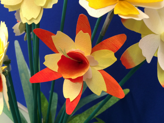 Bright orange daffodil type flower with yellow inner petals and orange centre.