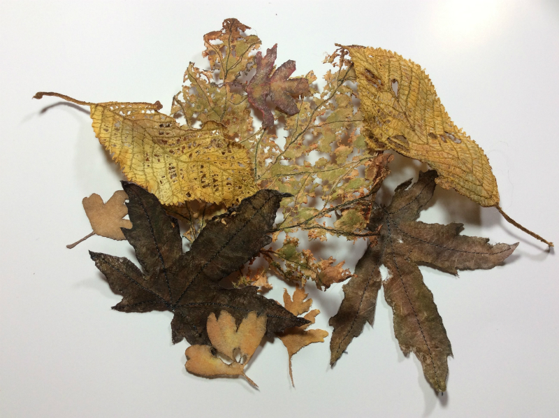 A variety of leaves in shades of olive green, gold and purplish brown, in various degress of decay.