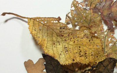 Leaves by Karen Lane – Feltmaker & Textile Artist
